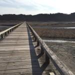 とと姉ちゃんでも登場。世界一長い木造歩道橋「蓬莱橋」